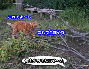 higai3293.jpg