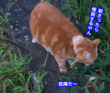 higai3281.jpg