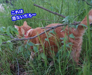 higai3261.jpg