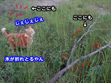 higai3252.jpg