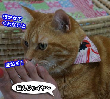 syukai0037.jpg