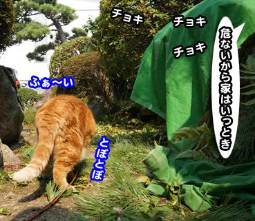 niwashi1094.jpg