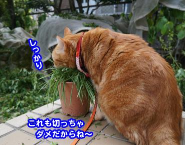 niwashi1080.jpg