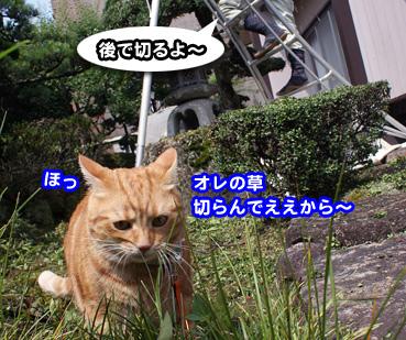 niwashi1960.jpg