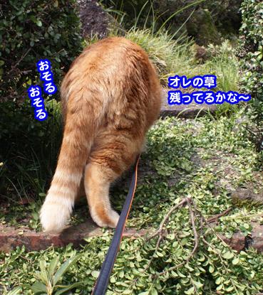 niwashi1936.jpg