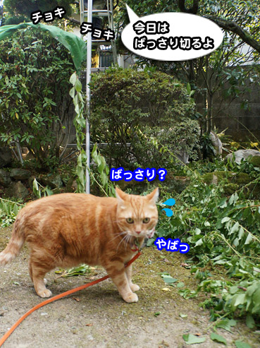 niwashi1090.jpg