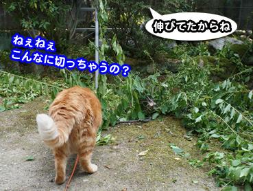 niwashi1088.jpg