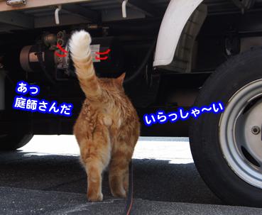 niwashi2241.jpg