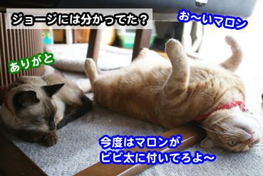 bib0699.jpg