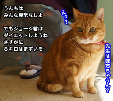 chiku1209.jpg