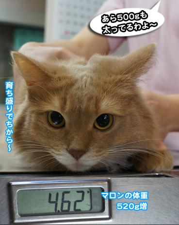 chiku1283.jpg