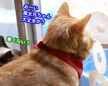 fuuta0384.jpg