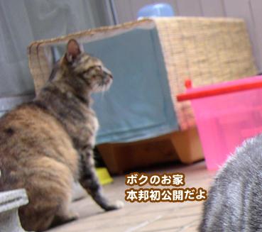 fuuta0063.jpg