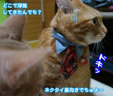 chichi4815.jpg