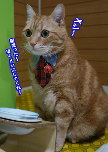 chichi4849.jpg