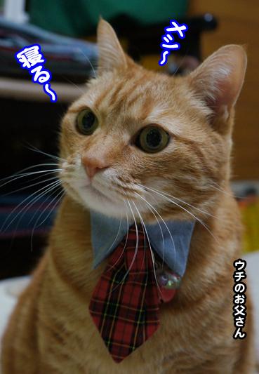 chichi4832.jpg