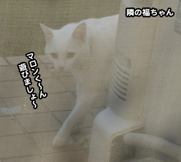 fuku9368.jpg