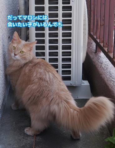fuku5179.jpg