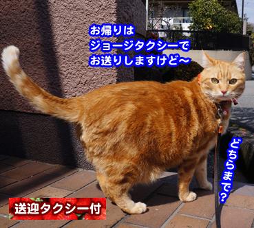 ichigo4135.jpg