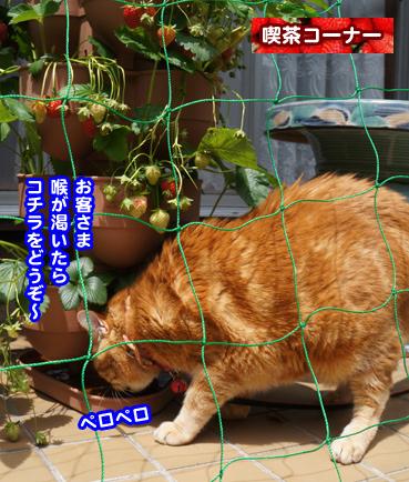 ichigo0099.jpg