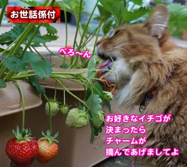 ichigo9195.jpg