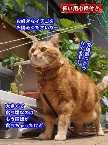 ichigo0108.jpg