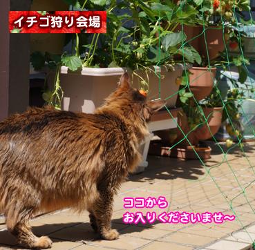 ichigo9499.jpg