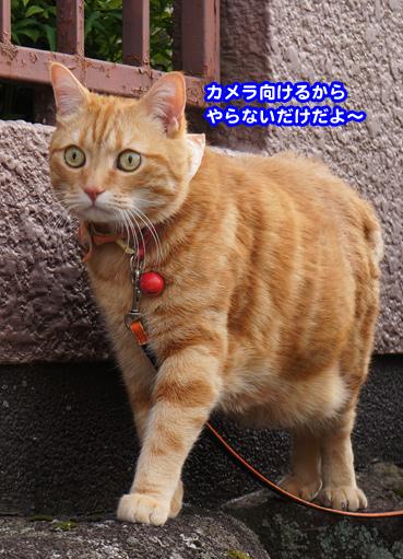 syaku0539.jpg