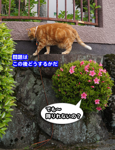 syaku0532.jpg
