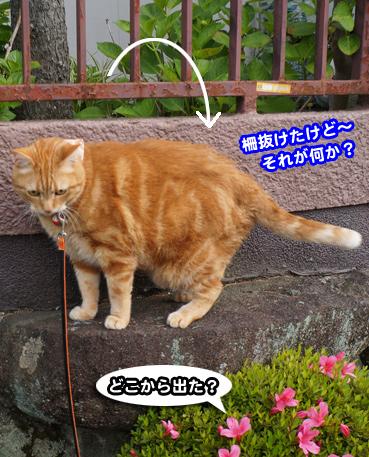 syaku0531.jpg