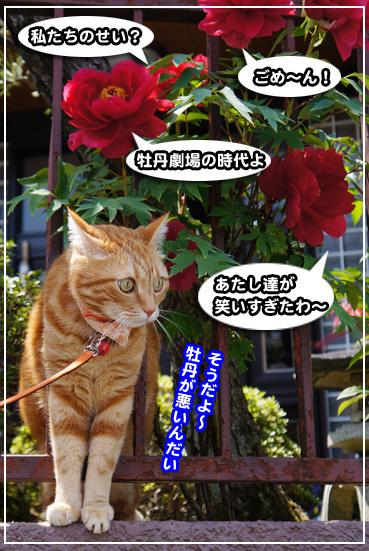 syaku8827.jpg