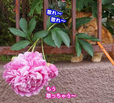 syaku0547.jpg