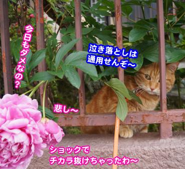 syaku0552.jpg