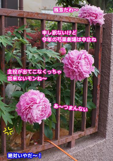 syaku0544.jpg