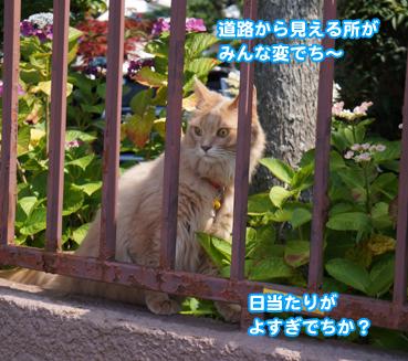 ajisai9365.jpg