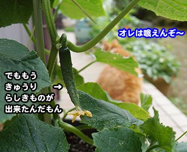 yasai0028.jpg