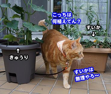 yasai9379.jpg