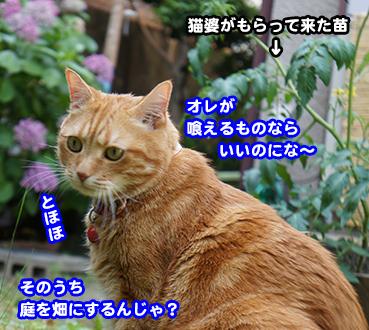 yasai9388.jpg