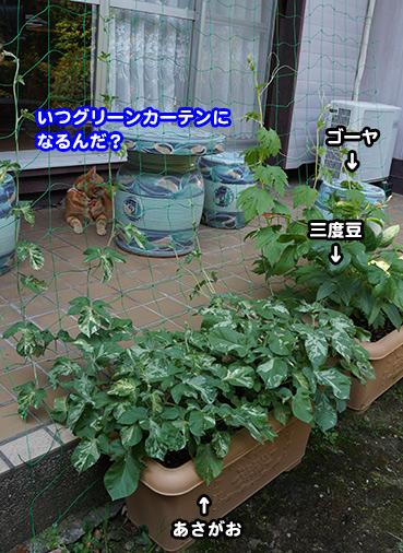 yasai9424.jpg