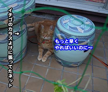 yasai9426.jpg