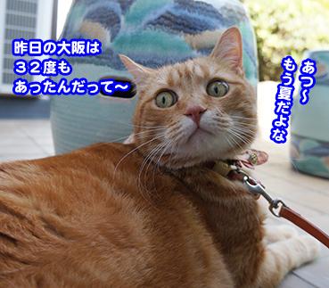 yasai9429.jpg