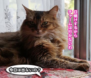 yasai9431.jpg