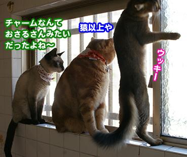 furo0171_1.jpg