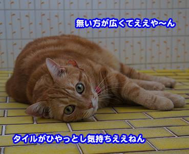 furo1454.jpg