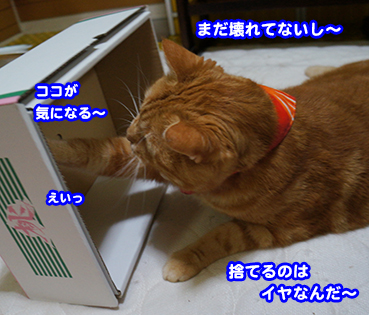 hako2276.jpg