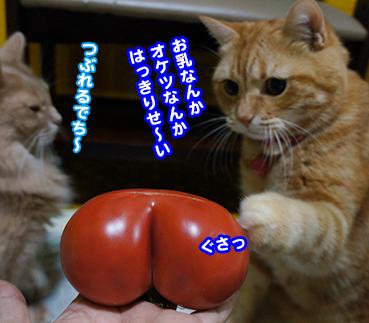 tomato6793.jpg