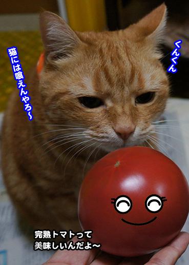 tomato6808.jpg