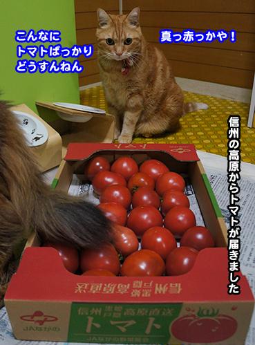 tomato6807.jpg