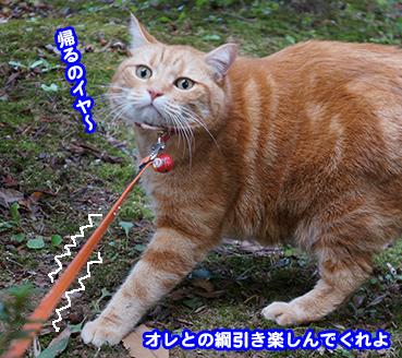 sanpo7376.jpg