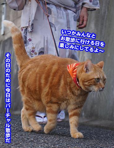 sanpo6260.jpg